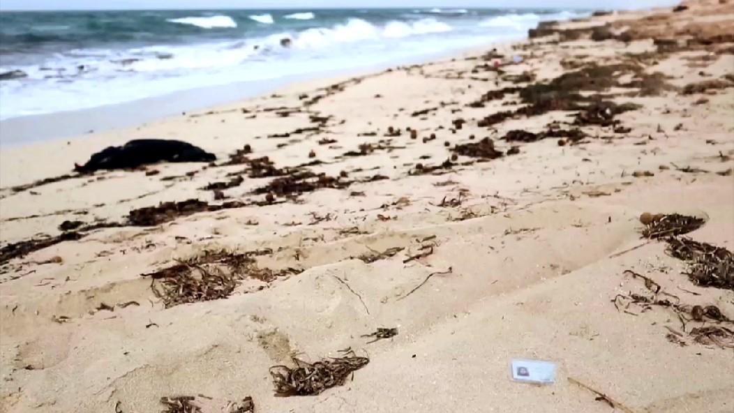 Video: Pass am Strand in Libyen
